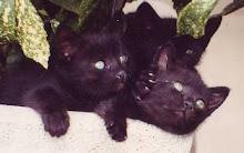 i micini neri
