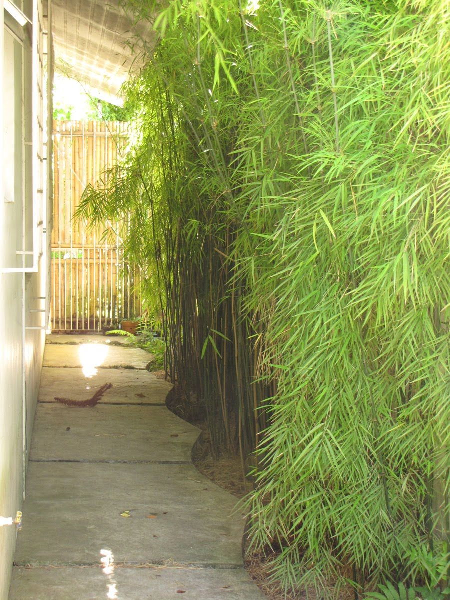 meu quintal meu jardim : meu quintal meu jardim:habitante