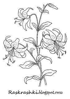 раскрашка для детей цветы