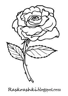 раскрашка для детей роза