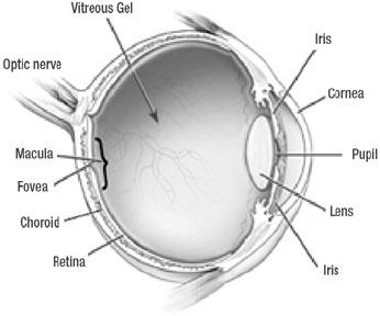 http://2.bp.blogspot.com/_fk7fEZ7a4jk/S7XMyRZduAI/AAAAAAAAACY/_A8H55JyucI/s1600/eye-anatomy.jpg