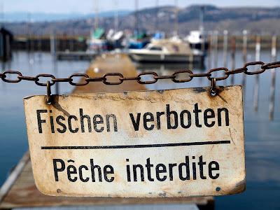 Pêche : alerte aux poissons pollués