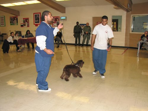 Chino Prison California Chino The Prison Pup Dog