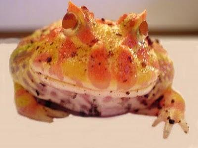 http://2.bp.blogspot.com/_flOuVwvNTVc/TO9cXgZ_MsI/AAAAAAAAAAw/i7cS4nxpF44/s1600/9bab9a35b4n_frog.jpg.jpg