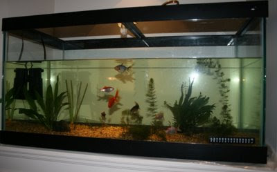 Aquarium with fish and plants