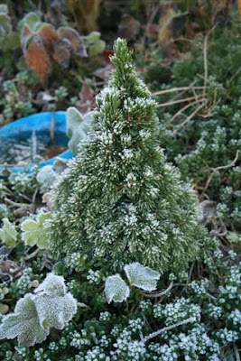 Frosted Christmas tree