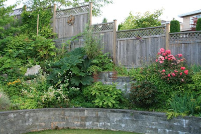 garden with gunnera