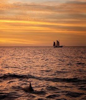 aterdecer con delfin