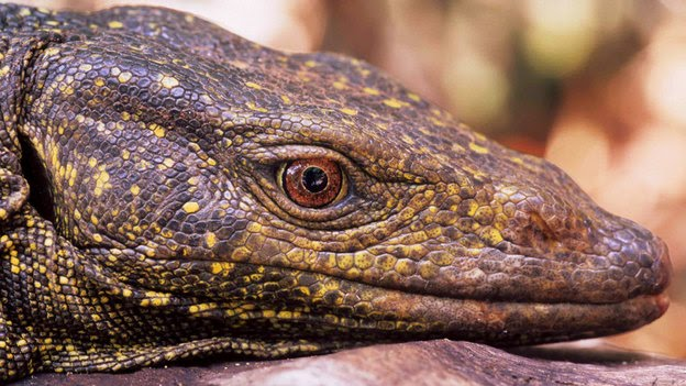New Giant Lizard Science Storiented