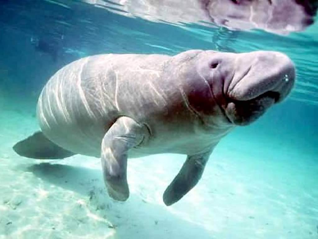 Фото морських тварин 8 фотография