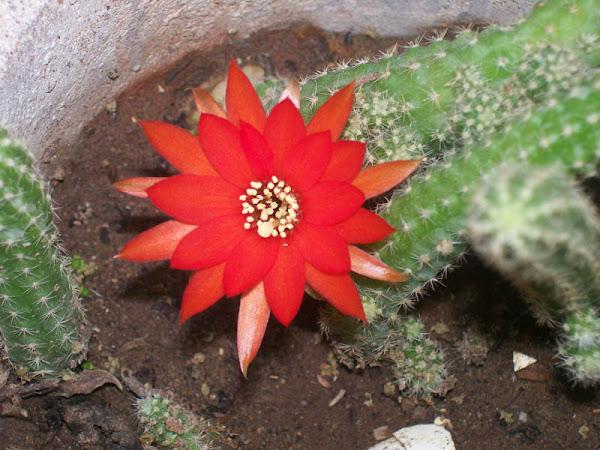 La flor de la envidia