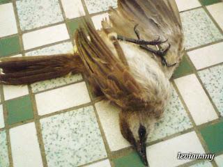 Birdie Prey (SE k550i)