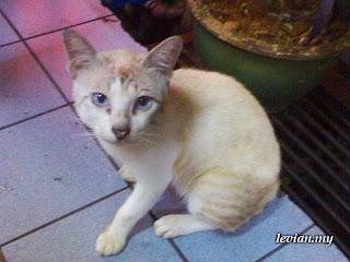 Kitty (SE w700i)