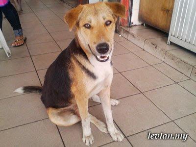 Dog (SE f100i)