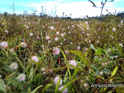 Flowers (SE f100i)