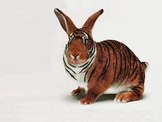 akibat Cinta Terlarang^^ X5emdi550irabbit-funny-pets-wallpapers