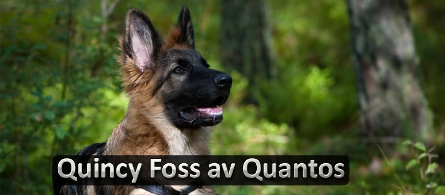 Schæferhunden Foss