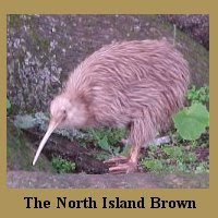 Whakatane Kiwitrust: Kiwi Species
