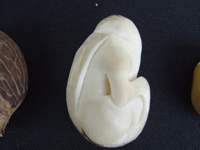 Griffin Tagua Nut