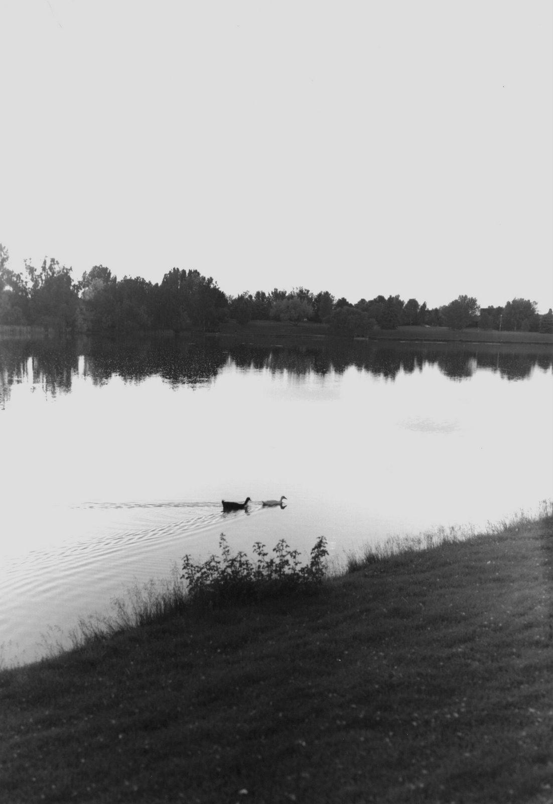 [ducks.jpg]
