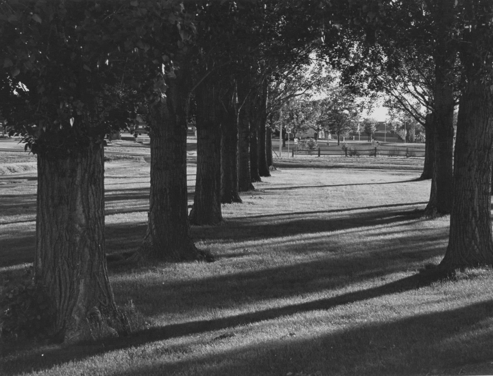 [trees+at+Aims.jpg]