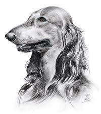 Hundeportraits SW