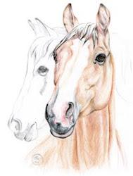 Klassische Pferdeportraits