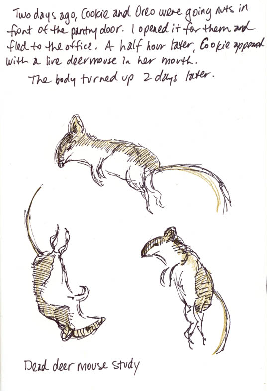Ronna 39 s blog deer mouse study for How do you draw a mouse