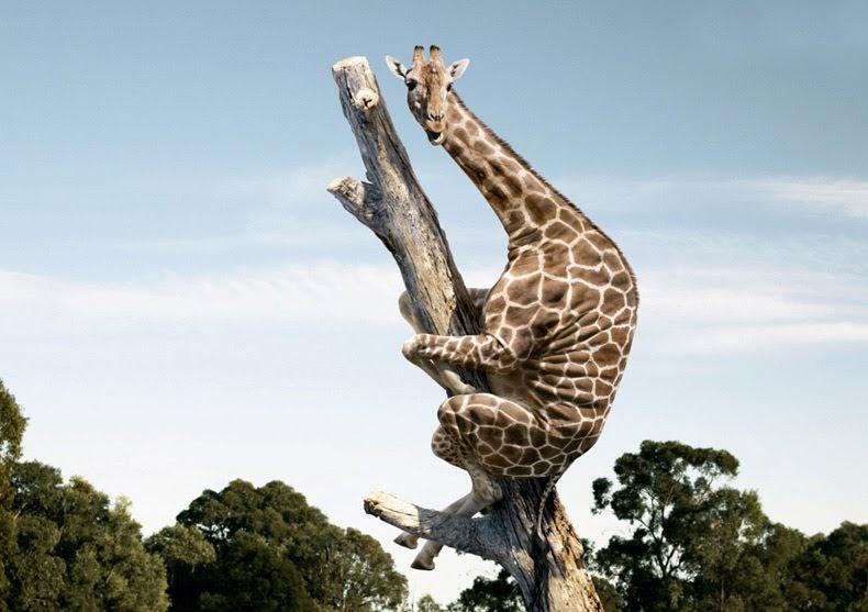 L 39 elixir du dr funkathus la girafe casher indeed - Girafe dans madagascar ...