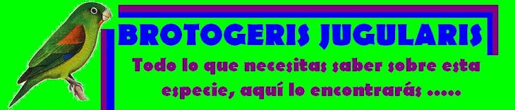 BROTOGERIS JUGULARIS