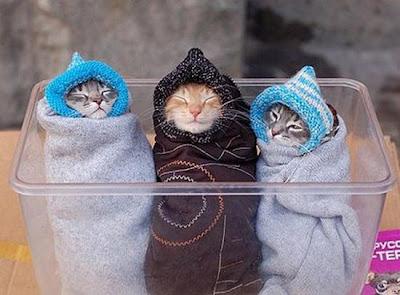 adalah 100 foto kucing yang lucu lucu imut manis cantik