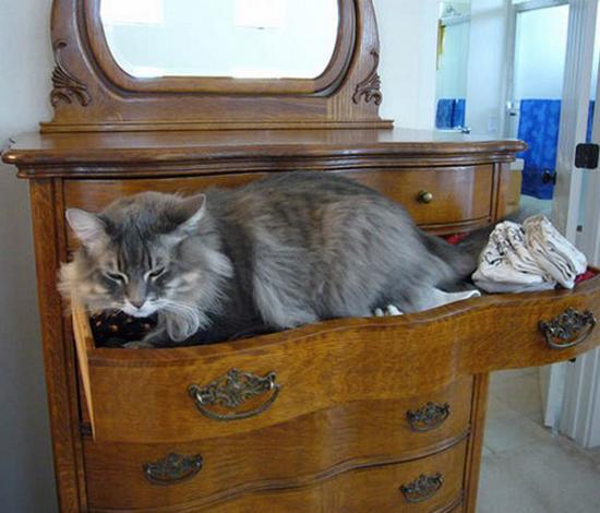 digaleri.com: 99 Foto Kucing Cantik, Imut dan Lucu!