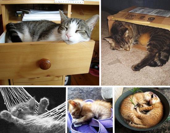 Gambar 99 Kucing Lucu Cantik Manis Dan Imut