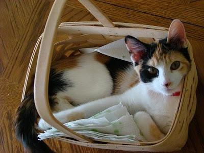 foto kucing imut, lucu, cantik