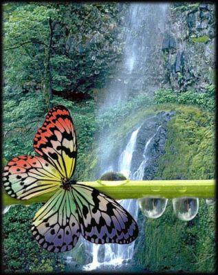 Farfalla su ramo davanti ad un ruscello
