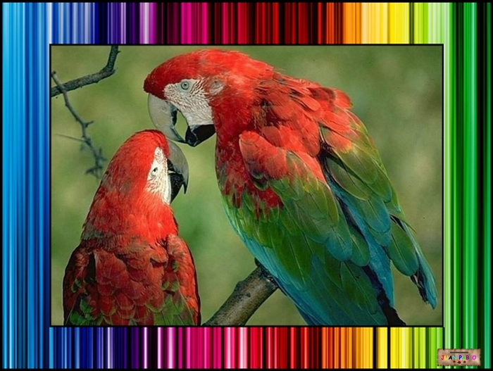 MARCOS PHOTOSCAPE ABCTRACTOS COLORES CALIENTES 4