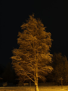 Frozen tree at night