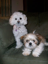 Our Pooches