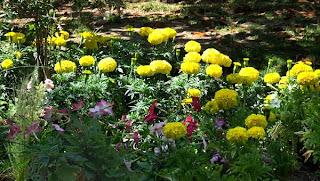 Jardins à Montpellier