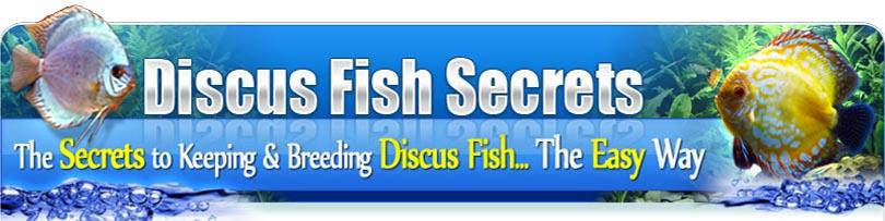 Discus Fish Info