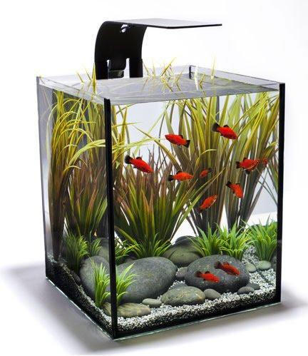modern aquarium equipment aquascape aquarium freshwater aquarium