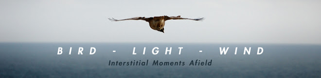 Bird Light Wind