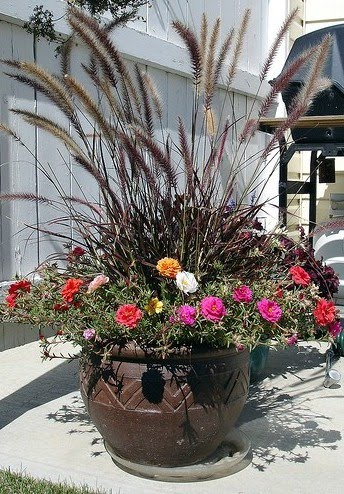 Buntys Balcony Design Tips for Containers