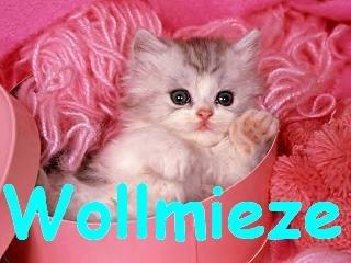 Wollmieze