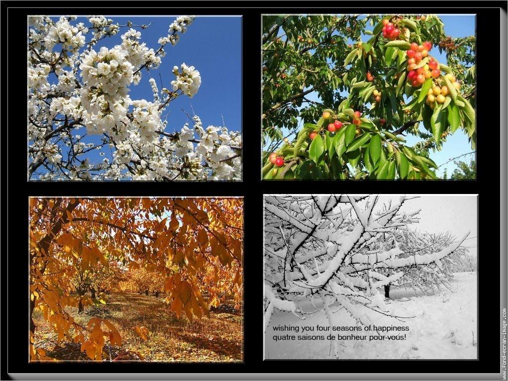 of the seasons - photo #20
