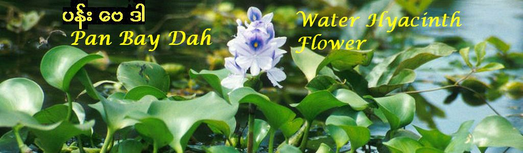 Pan Bay Dah  ပန္း ေဗဒါ   Water Hyacinth Flower