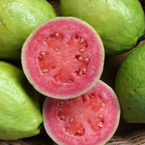 guava: the queen of vitamin C