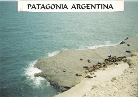 LOBOS MARINOS - PATAGONIA