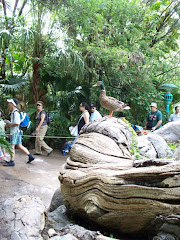 PATO ANIMAL KINGDOM 1