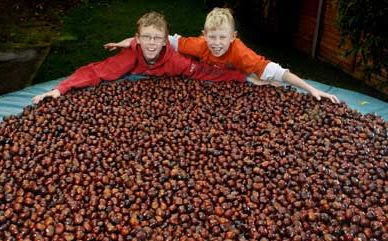 7,500 conkers